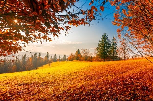 عکس با کیفیت پاییزی